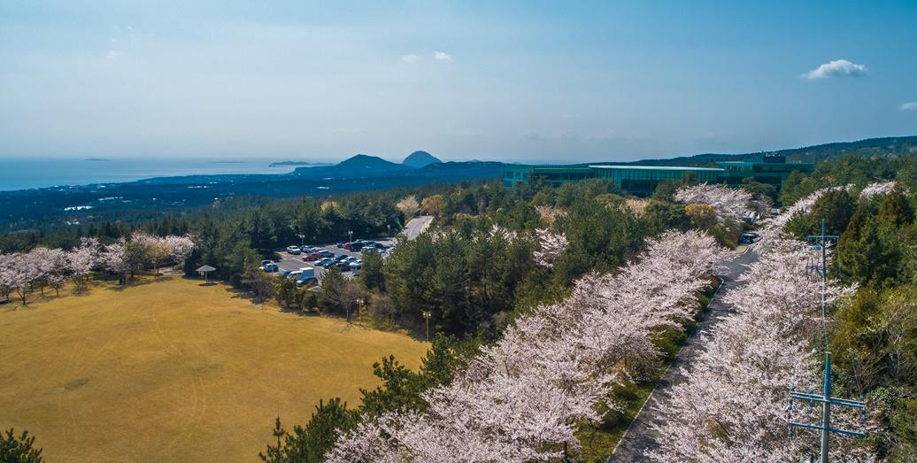 벚꽃_진입로B12